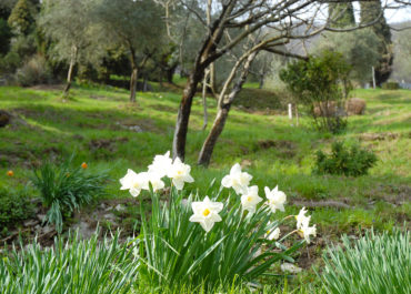 sentiero degli ulivi Gandria